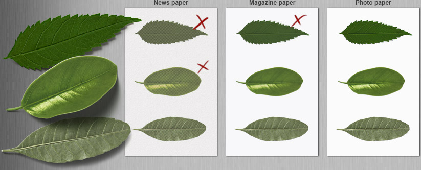 Prints Of Leaves On Different Types Paper